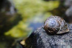 Ślimaczek na wodzie - skąpanie Zdjęcia Royalty Free