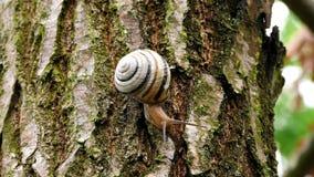 Ślimaczek rusza się na drzewie zbiory