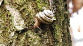 Ślimaczek rusza się na drzewie zdjęcie wideo