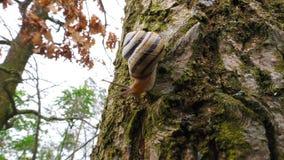 Ślimaczek rusza się na drzewie zbiory wideo