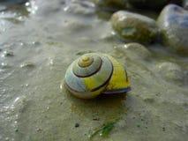 Ślimaczek Shell, fotografia stock