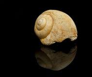 Ślimaczek skamielina odizolowywająca na czarnym tle Fotografia Stock