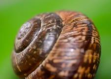 Ślimaczek skorupa Zdjęcie Stock
