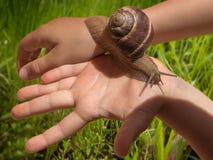 Ślimaczek w dzieciak rękach z zielonej trawy tłem Obrazy Stock