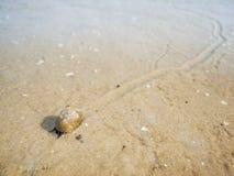 Ślimaczek z śladem przy niski tide_horizontal Obrazy Stock
