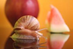 Ślimaczek z jabłkiem i arbuzem fotografia stock