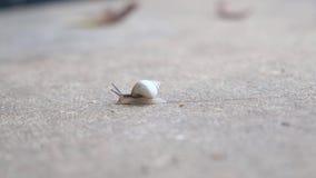 Ślimaczka czołganie na betonie, zakończenie w górę strzału zdjęcie wideo