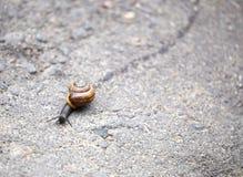 Ślimaczka czołganie na drodze Fotografia Royalty Free