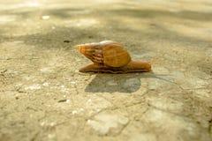 Ślimaczka czołganie na ziemi Fotografia Stock
