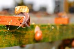 Ślimaczka gospodarstwa rolnego rozciągliwość zestrzelają Fotografia Royalty Free