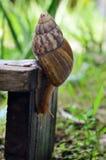 Ślimaczka zakończenia widok ono ślizga się na drewnianym talerzu (Selekcyjna ostrość) obrazy stock