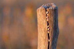 Ślimaczki chujący w słup przy zmierzchem Obrazy Stock