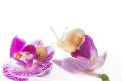 Ślimaczki i kwiaty (odizolowywający na biel) Obrazy Stock