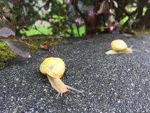 Ślimaczki na deszczowym dniu zdjęcie royalty free