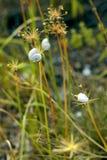 Ślimaczki na roślinach na lata polu Fotografia Royalty Free