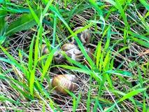 Ślimaczki w trawie na słonecznym dniu zdjęcie stock