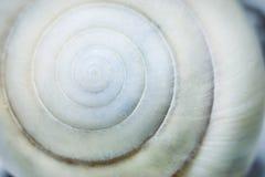 Ślimakowaty seashell tło Zdjęcia Stock