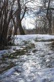 Śliski footpath w zima parku lodowata road zdjęcia royalty free