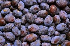 Śliwki z wodą Fotografia Stock