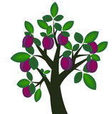 śliwkowy drzewo Fotografia Royalty Free