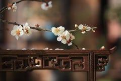 Kwiat i stół Fotografia Stock