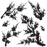 Śliwkowy okwitnięcie Rozgałęzia się sylwetka set ilustracji