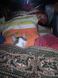 Ślizganie kota super kot fotografia stock