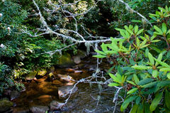 Ślizgowy Rockowy Pisgah las państwowy zdjęcie royalty free