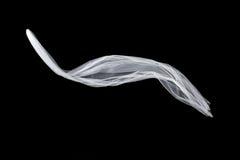 Ślubna biała Bridal przesłona odizolowywająca na czarnym tle przesłona trzepocze w wiatrze Obrazy Royalty Free