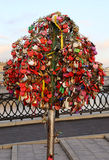 Ślubny drzewo Obrazy Stock