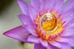 Ślubny para pierścionek Zdjęcie Royalty Free
