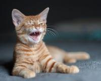 Śmiać się przy śmiesznym dowcipem Fotografia Stock