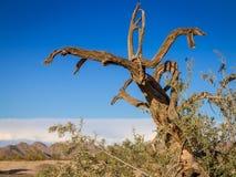 Śmiały colourful Arizona pustyni krajobraz Zdjęcie Royalty Free