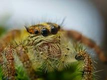 Śmiały insekt zdjęcia stock