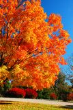 Śmiali kolory jesień obraz royalty free