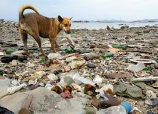 Śmieci pies na plaży i dennym zniszczenia środowisku obrazy royalty free
