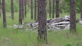 Śmieciarski usyp w lesie, zanieczyszczenie środowiska, pogodny letni dzień, las, piękni zieleni drzewa zbiory