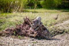 Śmierć drzewa oliwne należni budować drogowi drzewa dostaje i torned oddzielnie niszczyć brutalnie zabijać, siekającym, obrazy stock