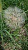 Śmierć kwiat fotografia royalty free