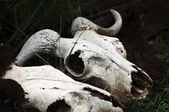 Śmierć W Kenja Obrazy Stock
