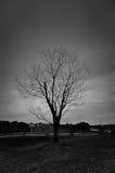 Śmiertelny drzewo w podczas czarny i biały Obraz Stock