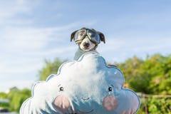 Śmieszna fotografia Russell pies w s pilota ` szkłach fotografia royalty free