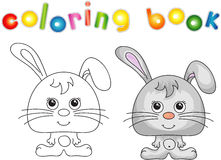 Śmieszna i śliczna zając (królik) Fotografia Stock