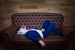 Śmieszna jednorożec w eleganckim kostiumu kłama na kanapie zdjęcie stock