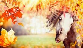 Śmieszna końska twarz z jesieni ulistnieniem, spada liśćmi i tekst sprzedażą, Zdjęcia Stock