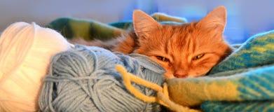 śmieszna kot czerwień Fotografia Royalty Free