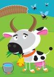 Śmieszna krowa na łące Zdjęcia Royalty Free