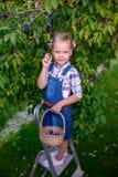 Śmieszna małe dziecko dziewczyna stoi na th z koszykowy pełnym śliwki Fotografia Stock
