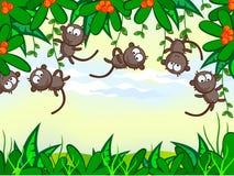 śmieszna małpa Obrazy Royalty Free