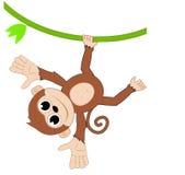 Śmieszna małpa Zdjęcia Stock